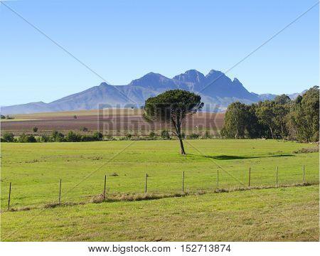 Stellenbosch, Farming Area, Western Cape South Africa