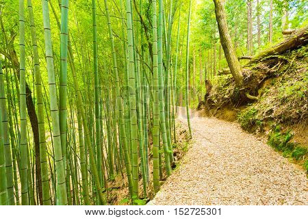 Bamboo Forest Path Less Taken Tsumago Castle H