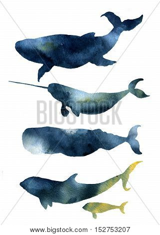 Watercolor whales set. Hand drawn sea animals silhouettes with sky texture. Prints with blue whale, harwhale, cachalot, orca isolated on white background. For design, print, fabric and background