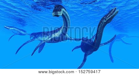 Plesiosaurus Marine Reptiles 3D Illustration - Plesiosaurus marine reptile dinosaurs swim together in Jurassic Seas to find their next prey.
