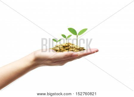 Hand holding green trees growing on a pile of golden coins / Green business and investment / Business with csr and environmental concern