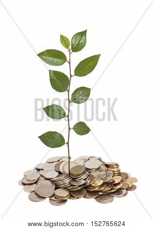 Tree growing from pile of coins isolated