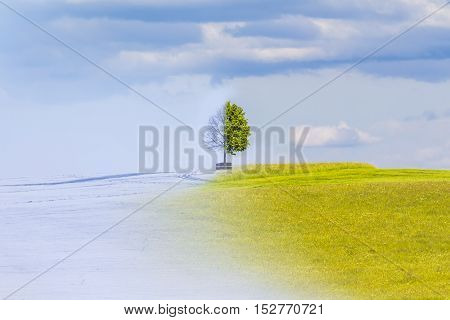 Climate change from winter to summer time over the year. Nature weather visual with a single tree on a hill. Cold snow has a transition to a warm meadow. Icy branches have a transition to juicy leaves.