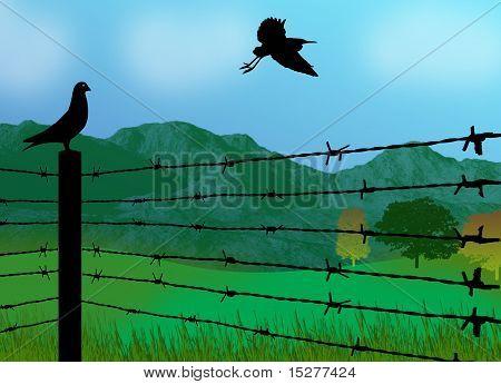 Bird Sitting On Prison Fence