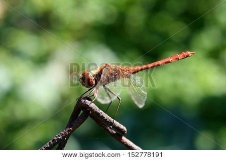 Dragonfly sitting on a wire in bright summer sunlight