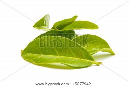 Green tea leaves isolated on white background