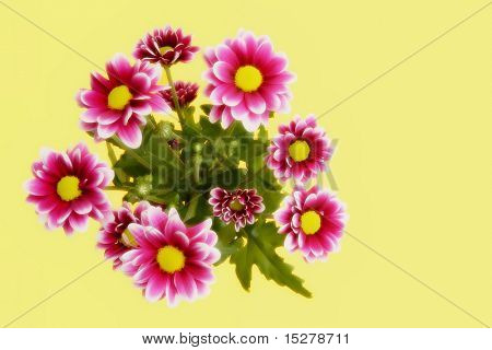 Flower bouquet isolated on yellow