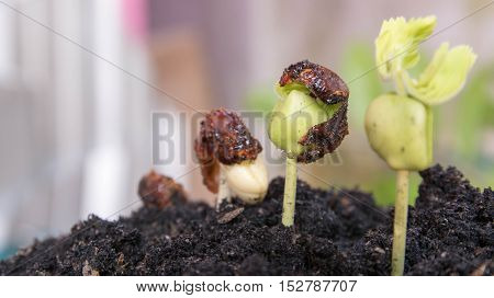 seed germination on soil, evolution concept, Seeding Plant seed growing step concept