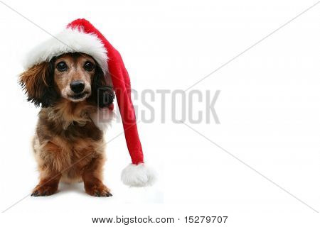 Dachshund santa, funny expression. One in a holiday series featuring this pup. poster