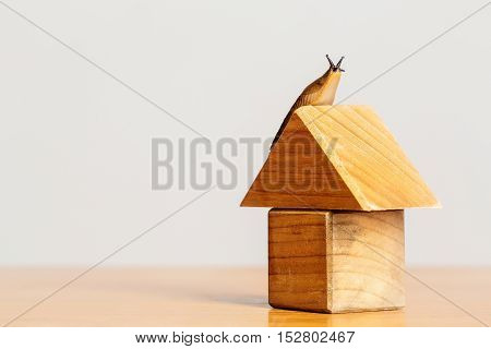 Wooden house of toy building blocks and snail slug gastropod mollusc on roof copy space on timber desk