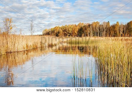 Autumn landscape. View of lake and forest