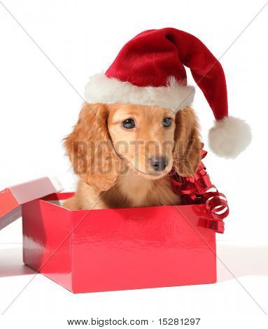 Christmas puppy in a Santa hat.