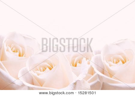Bridal bouquet of pale pink roses.