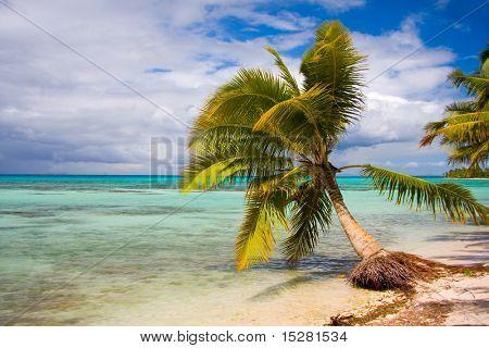 Palm tree on beautiful deserted tropical beach.