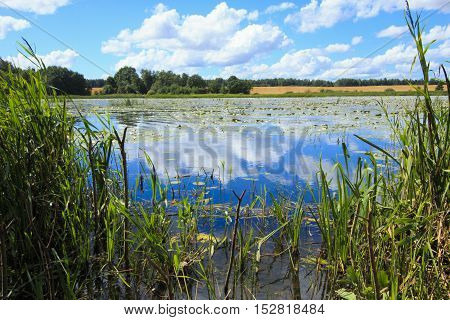Anglers a place in the northern part of the lake of water lilies for Lithuania.