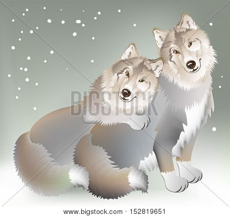 Couple of the wolves gentle loving each other on the background of a cold winter. Vector cartoon image.