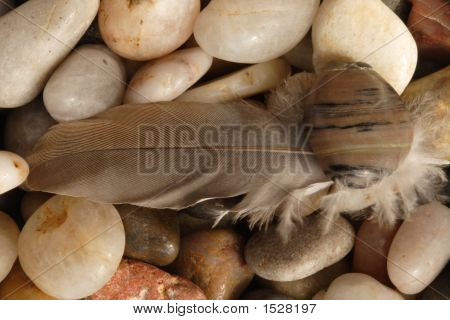 River Rocks And Feather
