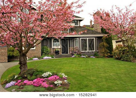 Beautiful home with blossoming cherry trees.