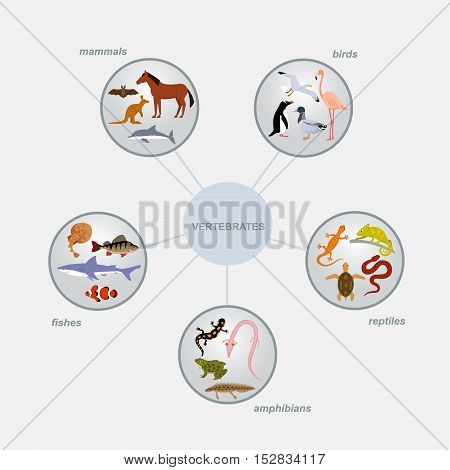 vertebrates classification infographics with round cells and animal icons