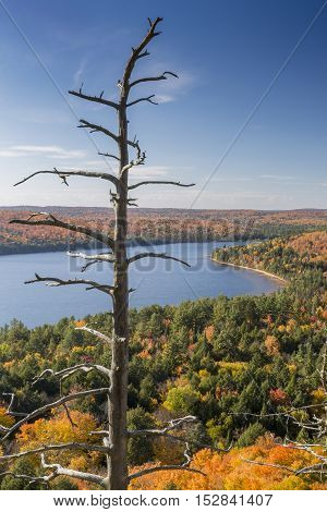 Dead Pine And Lake Surrounded By Fall Foliage - Ontario