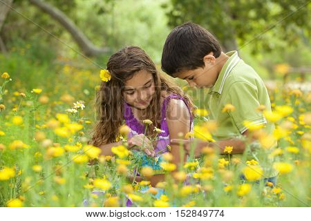 Cute brother and sister in a field of yellow wildflowers looking at a bug on his hand.
