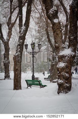 Snowstorm in city park. Trees and street in the snow