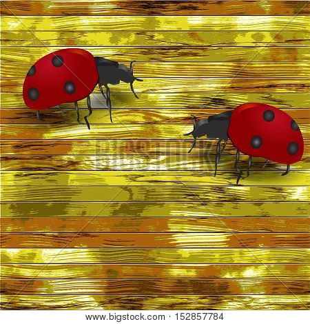 Grunge wooden background with ladybirds. Two ladybugs on a yellow, green and brown cracked wooden planks