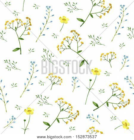 Floral seamless pattern.Colorful floral pattern with wild flowers and herbs on a white background, drawing watercolor.Forget-me-not,tansy and buttercup flowers.