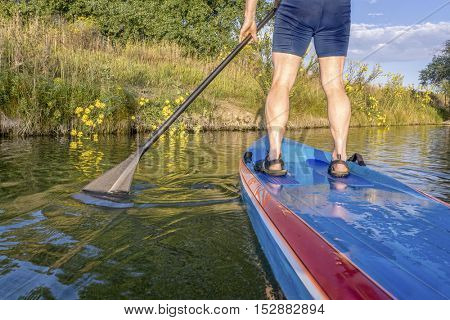 paddling stand up paddleboard along a shore with yellow wildflowers