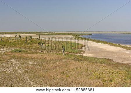 Shore Habitat of a Gulf Coast Refuge in the Luguna Atascosa Wildlife Refuge in Texas