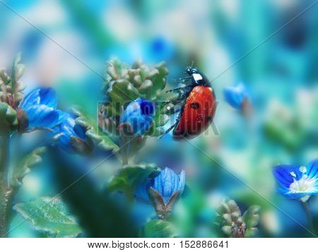 small ladybird on blue flowers in beautyfull day
