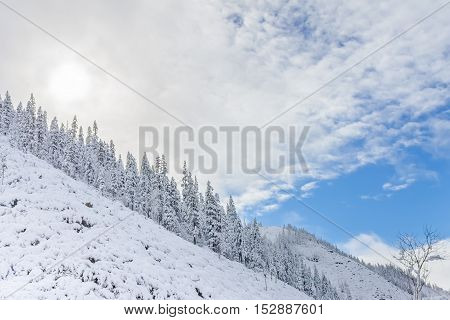 Beautiful taiga hills on Far East of Russia in early october. Taiga in winter. Beautiful nature. poster