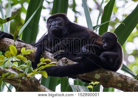 Young Momma With Her Baby Howler