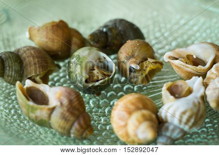 Escargot French For Snail