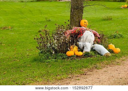 Pumpkin head scarecrow sitting against a tree.