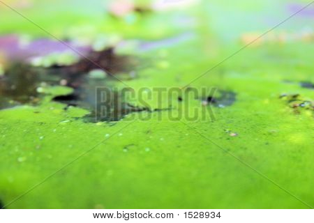 this is a closeup image of real pond scum poster