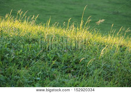 enlightened stripe of grass on the green meadow