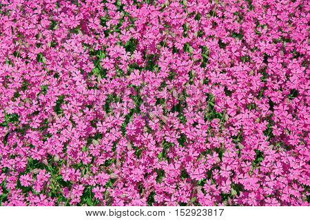 Image of the Background from Spring Flowers