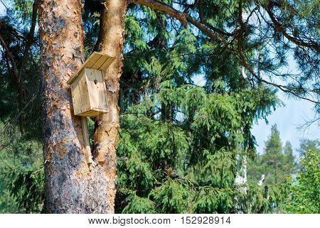 Rough self-made unpainted wooden birdhouse on a trunk of a pine in a wood against a blue sky