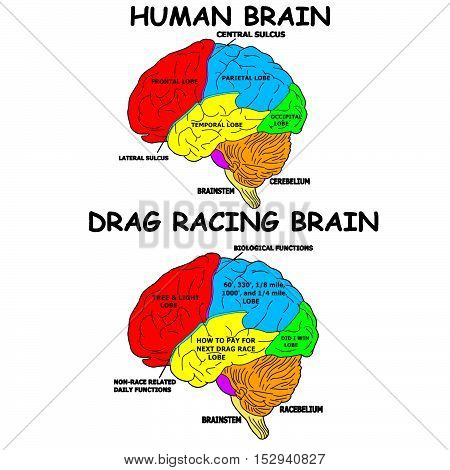 two brains and how they are a bit different