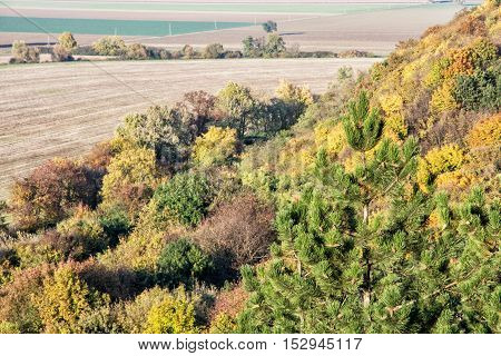 Colorful decidious and coniferous forest with fields in autunm time. Beautiful place. Natural scene. Vibrant colors.