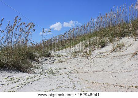 Sand dunes on the beach at Hilton Head