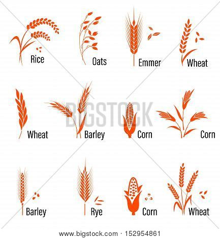 Cereals icon set with rice, wheat, corn, oats, rye, barley. Concept for organic products label, harvest and farming, grain bakery healthy food