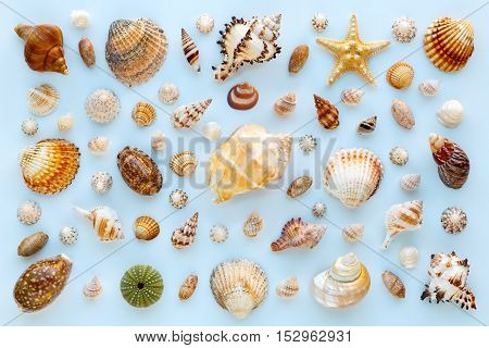 composition of exotic sea shells and starfish on a blue background. Flat lay top view