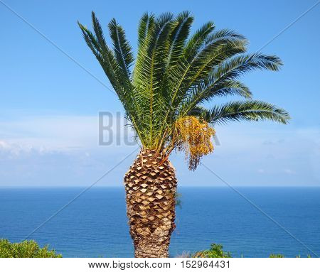 Palm trees on blue sky of Gioiosa Marea, Sicily