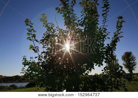 Setting sun seen through a tree projecting as a 9 prong star with rings around the star at Lake Zorinsky in Omaha Nebraska USA