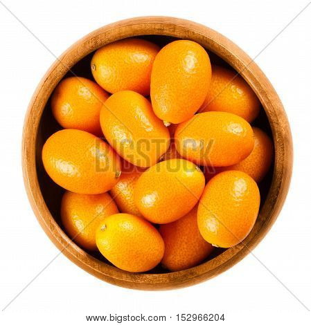 Fresh kumquats in a wooden bowl on white background, also called cumquats and Nagami kumquat. Edible small oval orange fruits of Fortunella margarita. Isolated macro food photo close up from above.