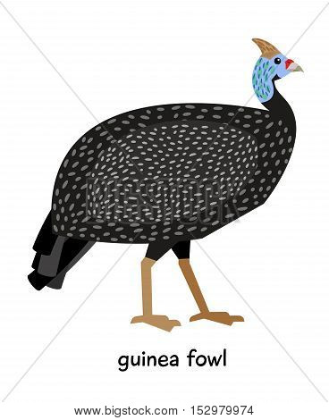 Nice mottled Guinea fowl with tuft vector illustration