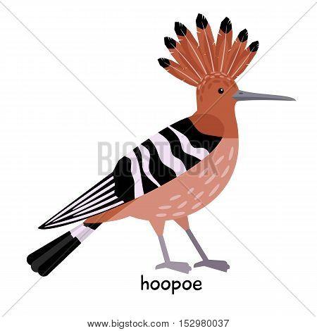 Nice Hoopoe with long sharp beak and crown vector illustration