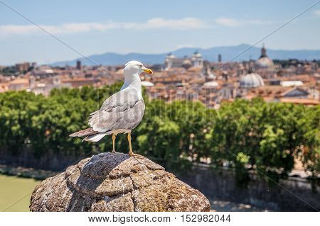 A seagull looking Rome cityscape from an aerial view lookout in Castel Sant'Angelo with Saint Peter basilica church on the horizon.